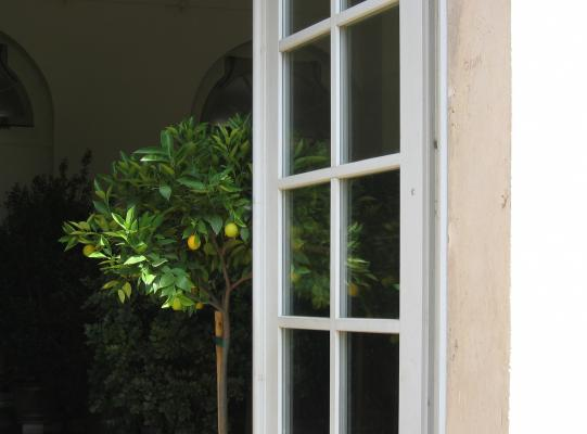 Orangerie, Dresden, grafisch, Pflanzen, Pillnitz
