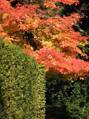 Dresden, farbig, grafisch, Kalender 2008, Landschaft, Pflanzen, Pillnitz, verwendet in