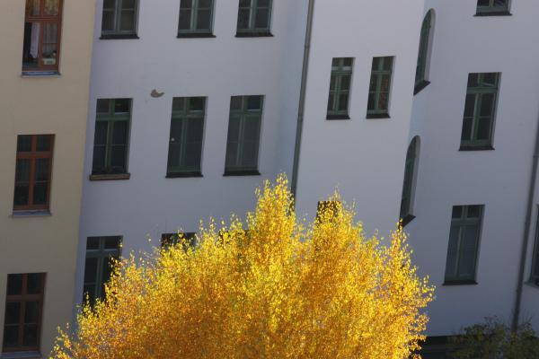 Altstadt, Architektur, gelb, Görlitz, Herbst, Oberlausitz, Schlesien