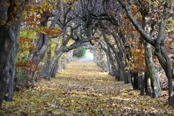 Allee, Bäume, Oberlausitz, Park, Pulsnitz, Sachsen